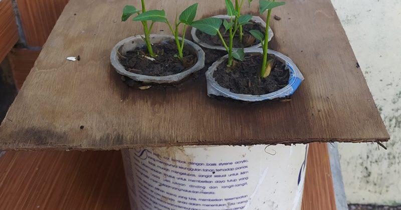 Hidroponik Sayuran Paling Sederhana di Rumah